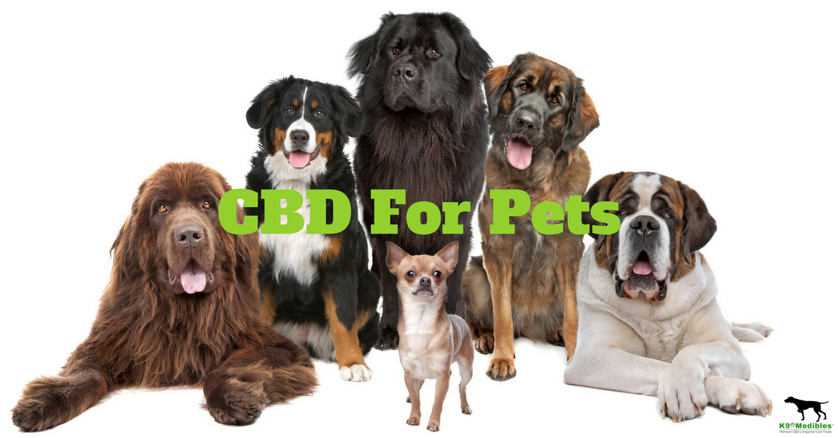 Is CBD Oil Safe for Pets?