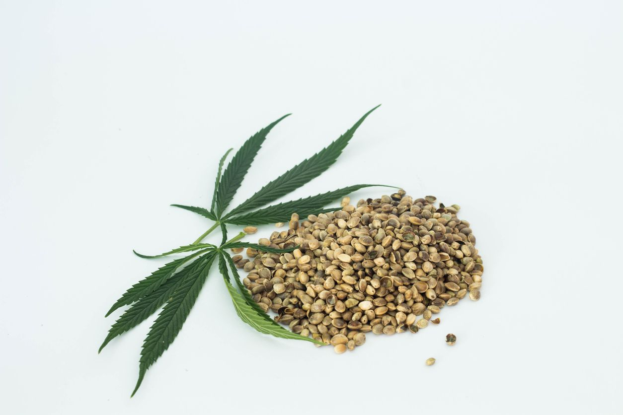 How to choose the best seeds for your Cannabis
