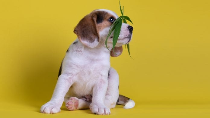Benefits of CBD for Pets – Simple Garden CBD