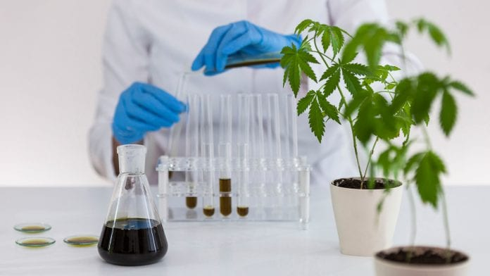 What is CBD and how to extract it from Hemp?